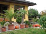 Senec- Tureň -  bungalov:4 izby + podkrovie, celkom 160m2 úžitkovej plochy plus garáž + bazén,zimná záhrada, pivnica.
